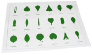 18KINDS PVC Leaf cards