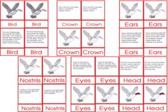 Bird Nomen clatures Age6to9