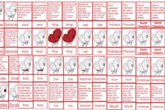 Butterfly Nomenclature Cards Ages 6 to 9