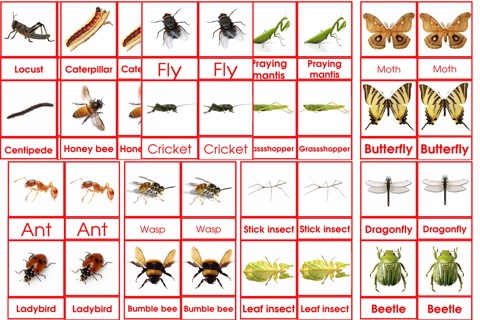 Insects 3to6