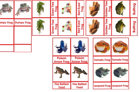 Types Of Frog Cards