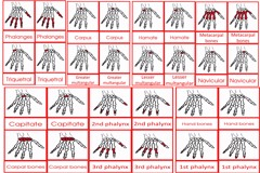 Parts Of The Human Hand Card Age to6