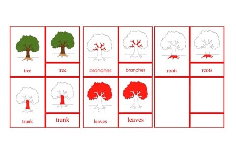 Parts of the Tree Primary Nomenclature Cards (red isolation)
