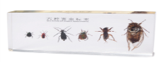 six kind of harmful insects collection (16.3*7.7*2)