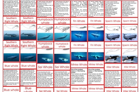 Typeof whaleage6to9