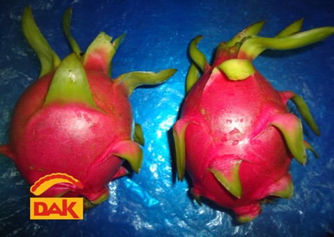 THANH LONG-DRAGON FRUIT