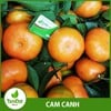 cam canh