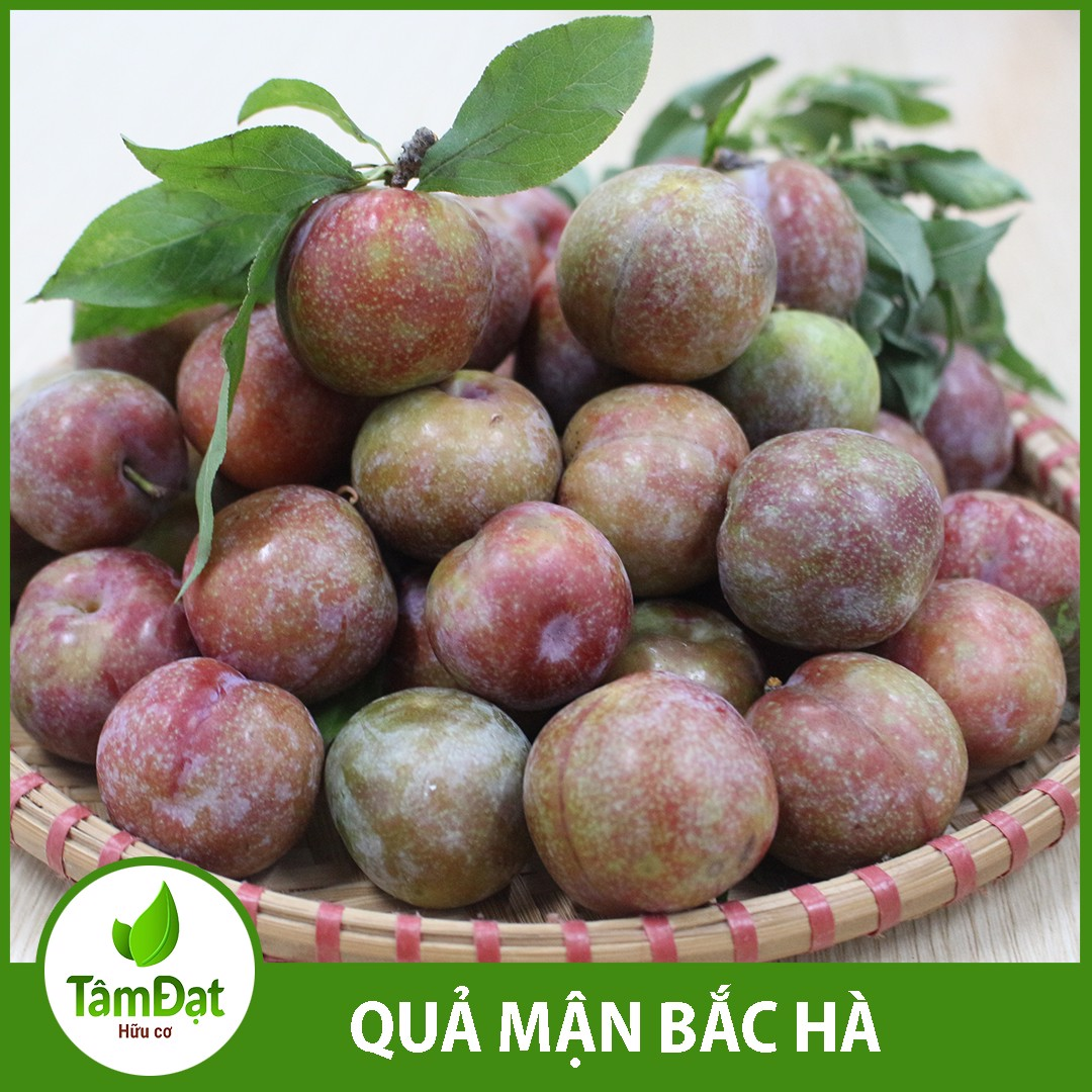 qua man bac ha