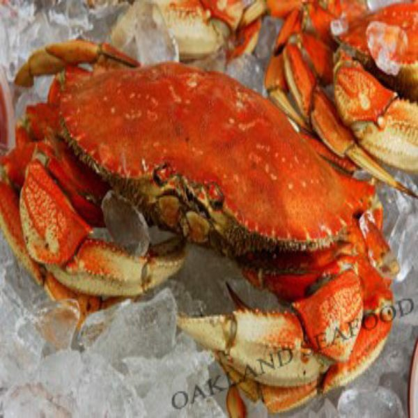 Dungeness Crab / Cua Dungeness – Cancer magister