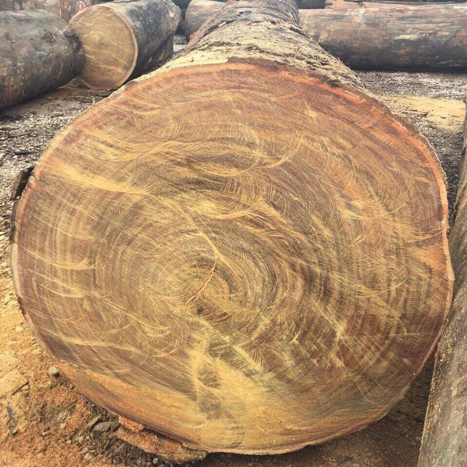 Kết quả hình ảnh cho gỗ lim