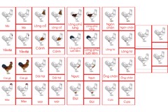 Chicken Nomenclature Cards