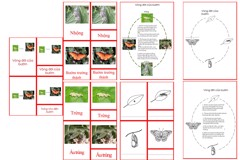 Butterfly Life Cycle Cards & Charts