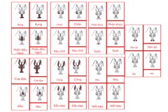 Crayfish Nomenclature Cards