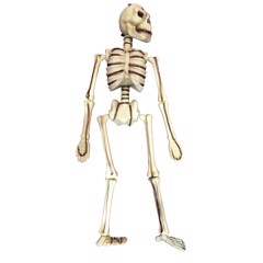 Bộ xương 3D 53 cm Halloween Uncle Bills UH00697