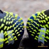 adidas Predator Freak .1 Low FG/AG Superlative - Core Black/Footwear White/Solar Yellow