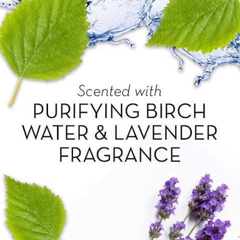 Sữa tắm Olay Fresh Outlast Purifying Birch Water & Lavender Body Wash 887ml