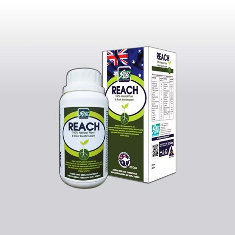 REACH - Chai 250ml (NND-NKR01)
