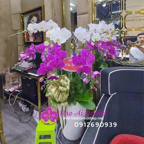 Chậu hoa lan 10 cành tặng tết LHD-569