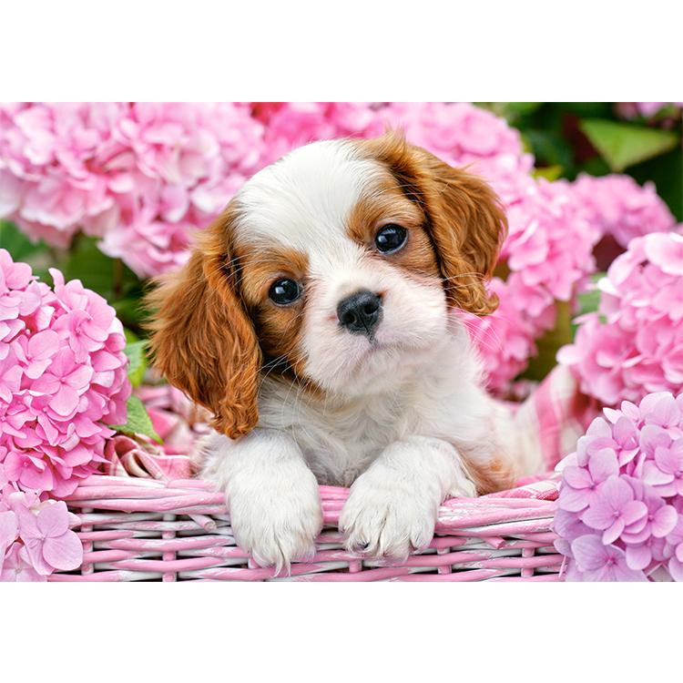 B0052233 Xếp hình puzzle Pup in Pink Flowers 500 mảnh CASTORLAND
