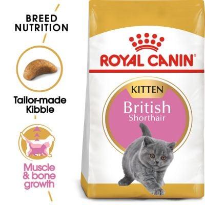 Hạt Royal Canin British Shorthair Kitten cho mèo anh lông ngắn dưới 12 tháng tuổi