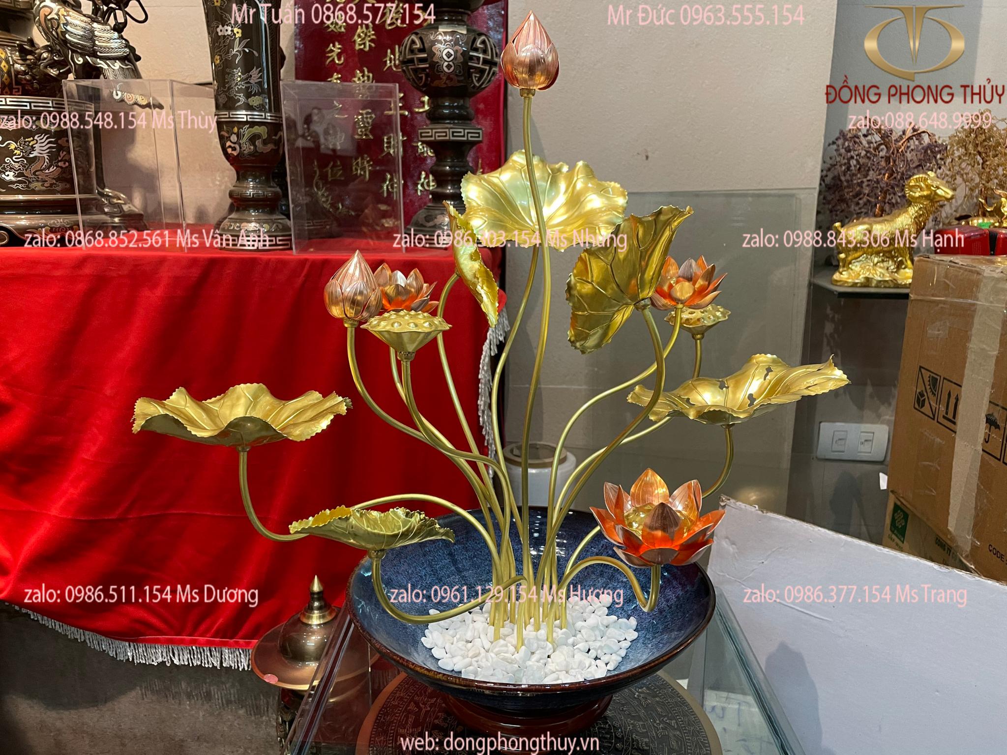 hoa sen đồng