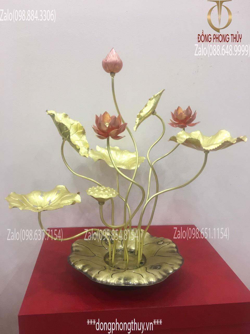 Chậu hoa sen đồng trưng bày Vàng Đỏ - Đế Lá sen Cao 50cm 9 cành