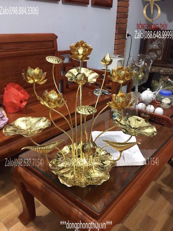 Chậu hoa sen đồng trưng bày Vàng Cả - Đế Lá sen Cao 50cm 15 cành