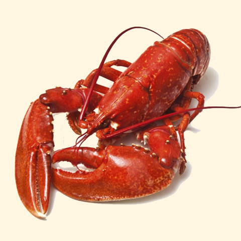 Tôm Hùm Alaska (Cook Lobster)