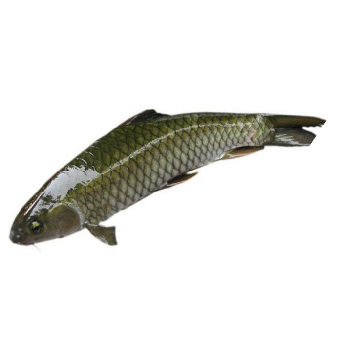 Cá trắm đen (cắt khúc)