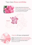 Phấn Phủ Secret Key Rose Water Oil Clear Powder 5g