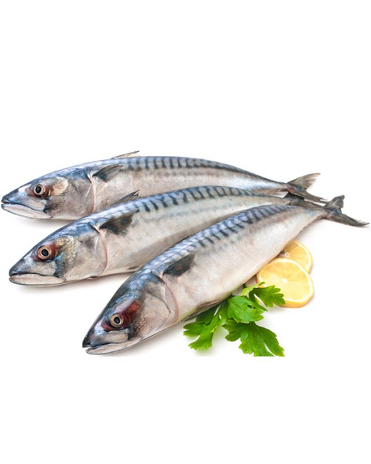 Norwegian Frozen Whole Saba Mackerel