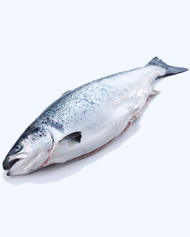 Chilled Norwegian Salmon Fillet