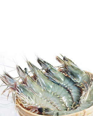 Vietnamese Extra Large Frozen Shrimp 800g Pack