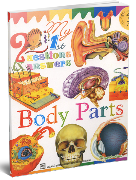 My 1 ST Questions & Answers - Body Parts