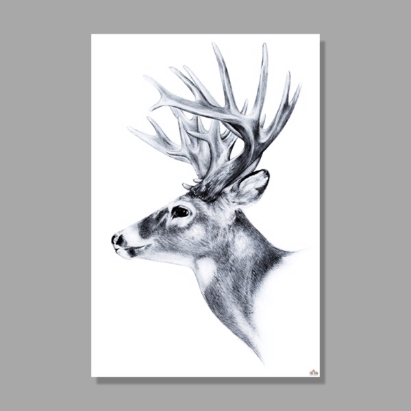 Tranh Canvas Deer Head 2 Alila (40x60cm - 50x75cm - 60x90cm)