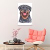 Tranh Canvas Rottweiler Dog Alila (60x90cm)