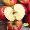 Juliet Organic Apple - 1kg