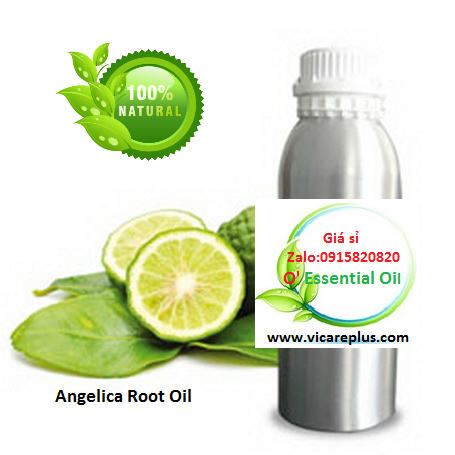 Tinh dầu Angelica Root Oil