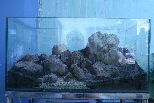 tạo bố cục bể thủy sinh