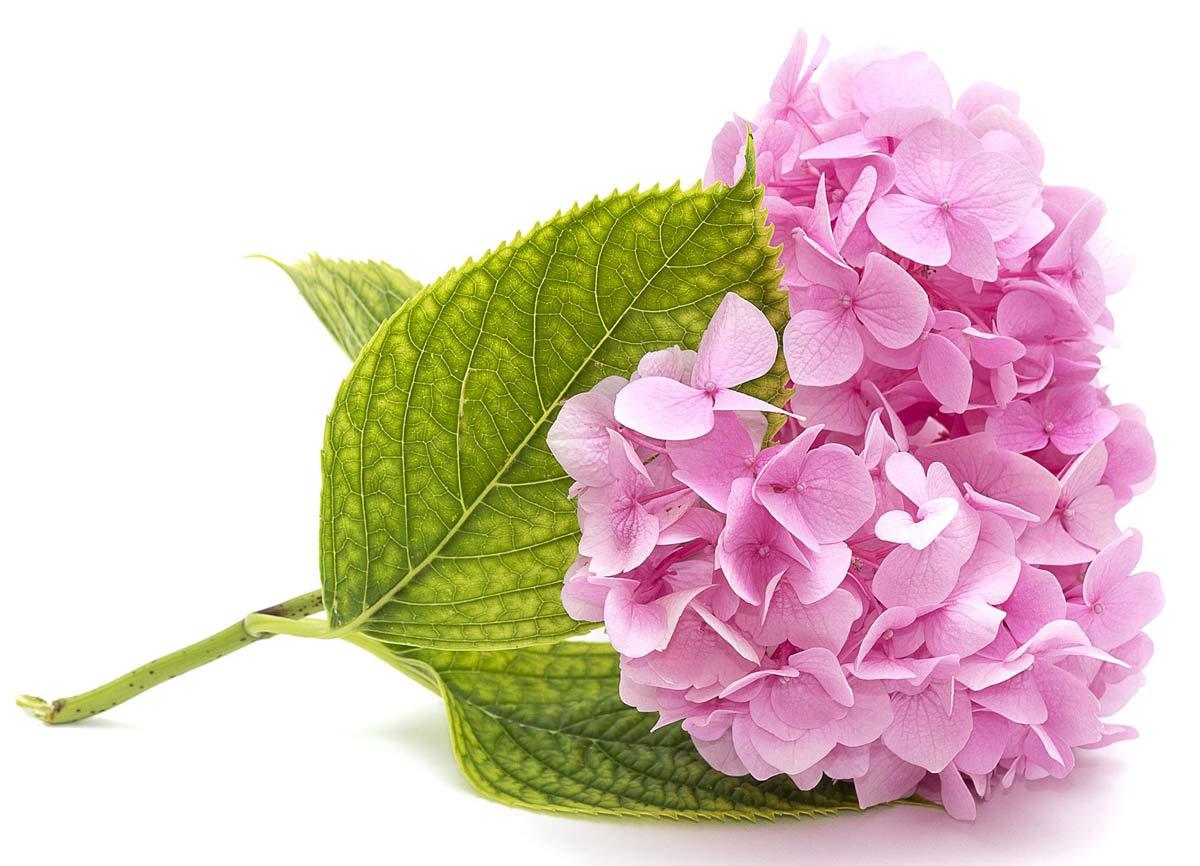 những loài hoa ý nghĩa tặng ngày của mẹ mother''s day