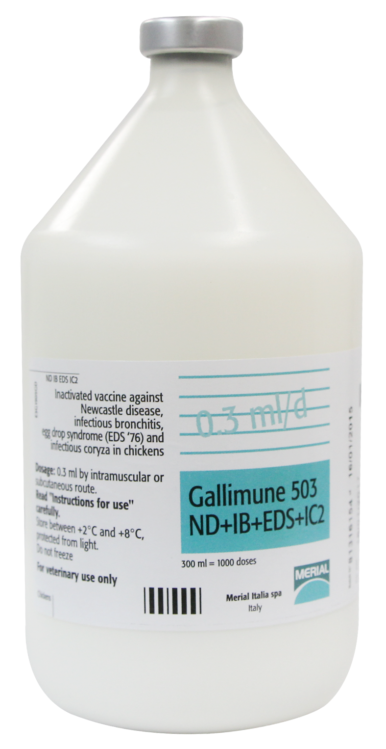 GALLIMUNE 503 ND+IB+EDS+IC2
