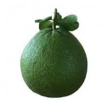 FRL-Green Grapefruit - Bưởi xanh