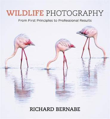 Wildlife Photography_Richard Bernabe_9781781575123_Octopus Publishing Group